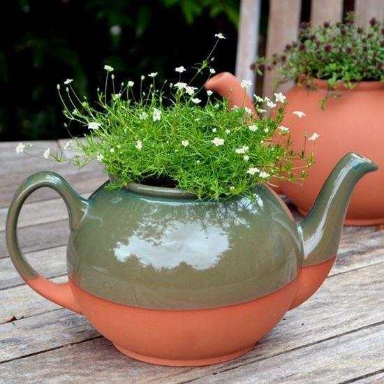 चाय की केतलियों में अलग-अलग तरह के पौधे उगा सकते है।