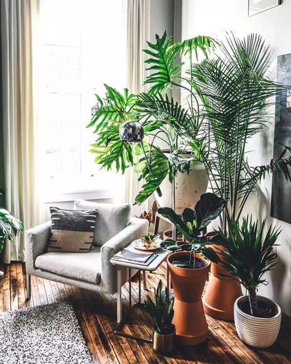 अगर बाहर रीडिंग कॉर्नर बनाना संभव नहीं है तो आप घर के अंदर ही बहुत सारे हाउसप्लांट लगाकर रीडिंग नुक्कड़ को प्राकृतिक एहसास दे सकते हैं।