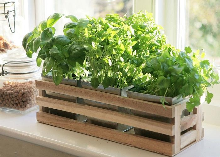 अगर आप किचन गार्डन बनाने की सोच रही हैं तो वुडन बॉक्स तैयार करवा सकती हैं।