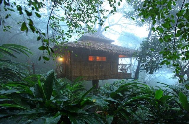 यह मुन्नार के कुमिली ह्वी में एक पेड़ पर स्थित हाउस है। यह 10 एकड़ के विशाल वृक्षों और वृक्षारोपण में फैला हुआ पेरियार वन्यजीव पार्क के पास बना है।