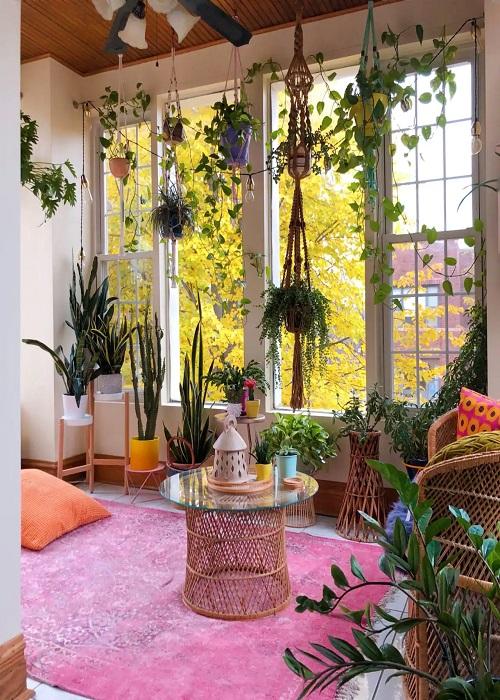 तो चलिए जानते हैं घर को सजाने के लिए पौधों को किस तरह इस्तेमाल किया जा सकता है...