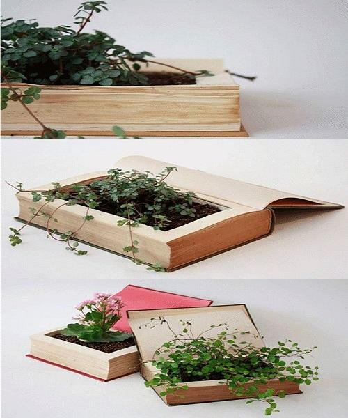 बुक में छोटे-छोटे प्लांट उगाना भी अच्छा रहेगा।