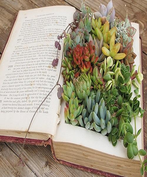 इसके लिए सबसे पहले किताब के सभी पन्नों को गोंद से चिपका लें। फिर उसे बीच से काट कर पौधा लगाएं।