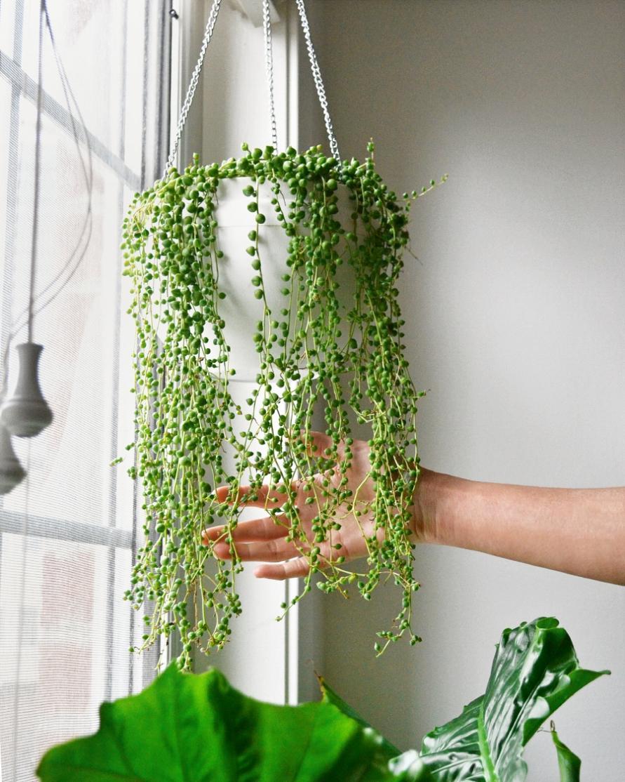 मल्टीटास्किंग इंडोर पौधे सिर्फ घर की सुंदरता ही नहीं बढ़ाते बल्कि ये सकारात्मक ऊर्जा को बढ़ावा देना, हवा को शुद्ध करना और आपको प्रकृति से जुड़ाव भी महसूस करवाते हैं।