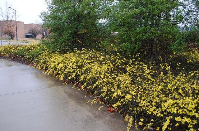 सर्दियों के मौसम में ठंडे तापमान के चलते पेड़- पौधे सूख कर मुरझाने लगते हैं। मगर बहुत से पौधे ऐसे होते हैं जो ठंड के मौसम में उगते हैं।