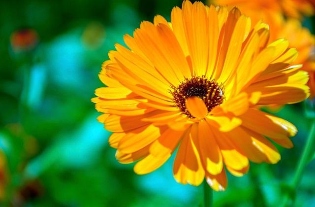 ऐसे में आप उन्हें अपने गार्डन या बालकनी में लगा सकती हैं। सुंदर व रंग-बिरंगे फूलों वाले ये पौधे दिखने में तो अच्छे लगते ही है। साथ ही अपनी खुशबू से घर का माहौल पॉजिटिव व खुशनुमा रखने में मदद करते हैं। तो आइए जानते हैं उन पौधों के बारे में...