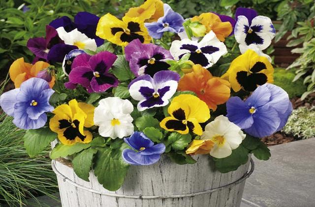 ये पौधा आप सुंदर से फ्लावर पॉट में लगाकर अपनी बालकनी या किचन में भी रख सकती है।