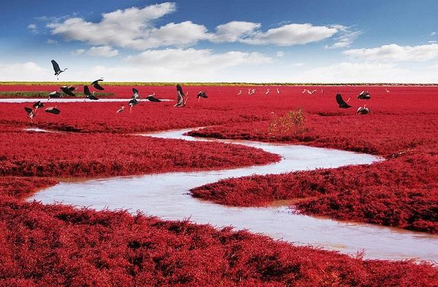 चीन में एक ऐसा बीच है जो चारों और से लाल रंग में बना है। ऐसे में इसे द रेड बीच (The Red Beach) कहा जाता है। यहां पहुंच कर हर किसी को दूर-दूर तक सिर्फ लाल रंग ही नजर आएगा।