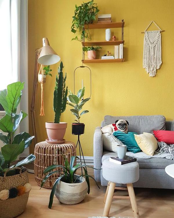 बहुत से लोग कमरे में ताजगी के लिए पीला रंग करवाते हैं क्योंकि वास्तु के अनुसार, यह रंग सुस्ती और उदासी दूर भगाता है।