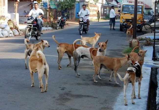 Image result for sitapur Dogs Uttar Pradesh