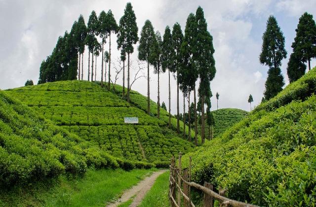उत्तर और पूर्व भारत में बसा डुआर्स शहर एक परफेक्ट रोमांटिक डेस्टिनेशन है।