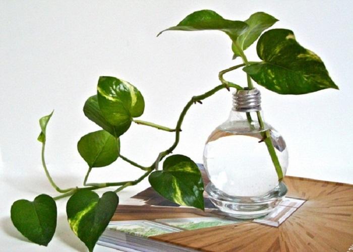 मगर बहुत से लोग ऐसे भी होते हैं जिन्हें ग्रीनरी का शौंक होता है। ऐसे में वे घर पर छोटे- छोटे पौधे लगाकर घर उसे डेकोरेट करते हैं।