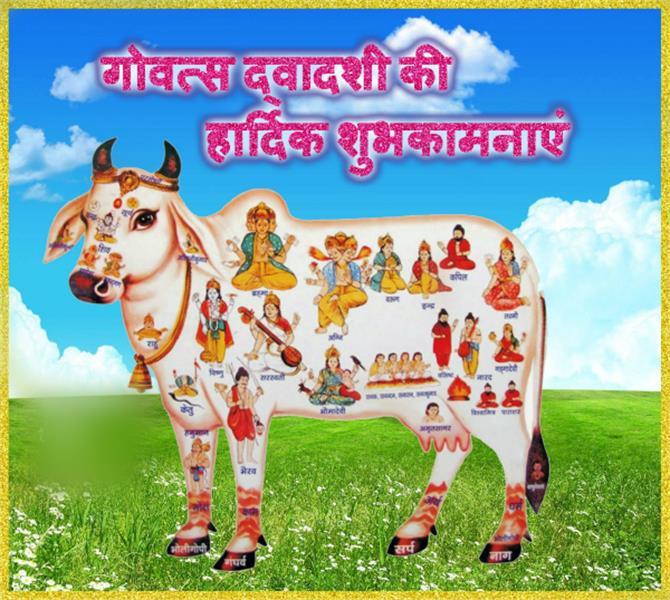 कल है गाय पूजन का पर्व: ये है विधि, महत्व व कथा