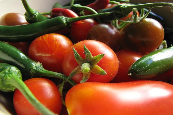 गुजरात किसानों ने किया विरोध, पाकिस्तान नहीं जाएंगी सब्जियां