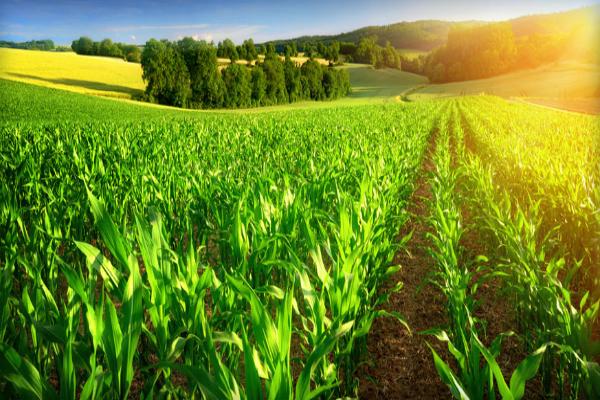 उर्वरक सबसिडी किसानों के बैंक खातों में जाएगी