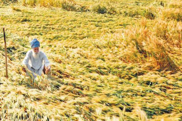 किसानों की दिवाली फीकी, नहीं मिल रहा MSP