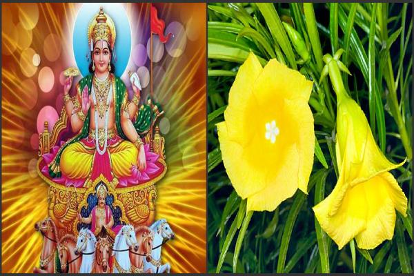 छठ पर्व पर करें इन फूलों से सूर्यदेव की पूजा, पूर्ण होगी हर मनोकामना