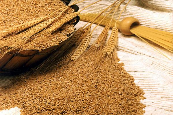 किसानों को गेहूं बुवाई पर एमएसपी घोषणा का इंतजार