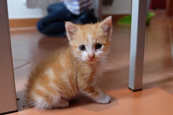 बिल्ली के लिए मांगा 2.5 करोड़ रूपए का मुआवजा !