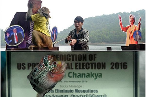 अमरीकी चुनाव को लेकर सच साबित हुई मछली और बंदर की भविष्यवाणी !