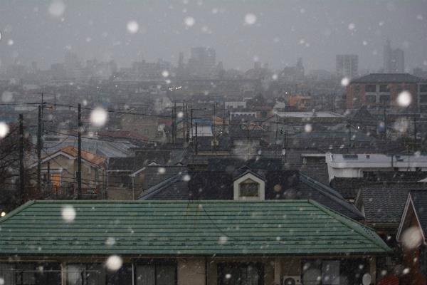 टोक्यो में 54 वर्ष बाद नवंबर में दिखा एेसा नजारा(Pics)