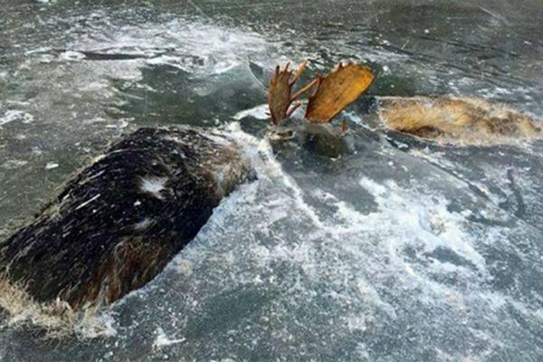 लड़ते-लड़ते पानी में जा गिरे ये दोनों और हुआ ये हाल(Pics)