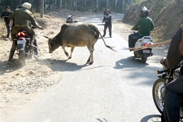 उधमपुर में लावारिस गाय के हमले से दो महिलाओं की मौत