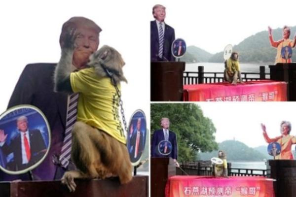 बंदर ने की भविष्यवाणी,'ट्रंप होंगे अमरीका के अगले राष्ट्रपति'(Pics)