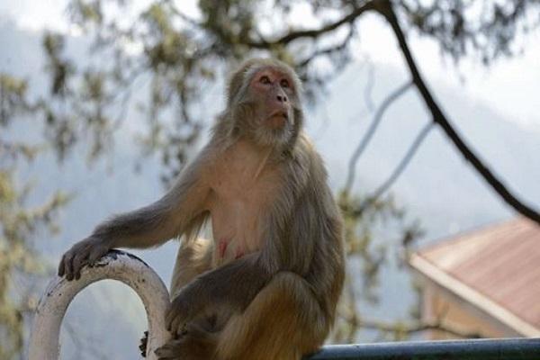 बंदर के कारण हिंसक संघर्ष, 20 लोगों की गई जान