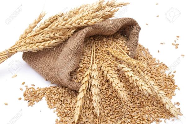 गेहूं पर आयात शुल्क और कम करने की फिलहाल योजना नहीं: सरकार