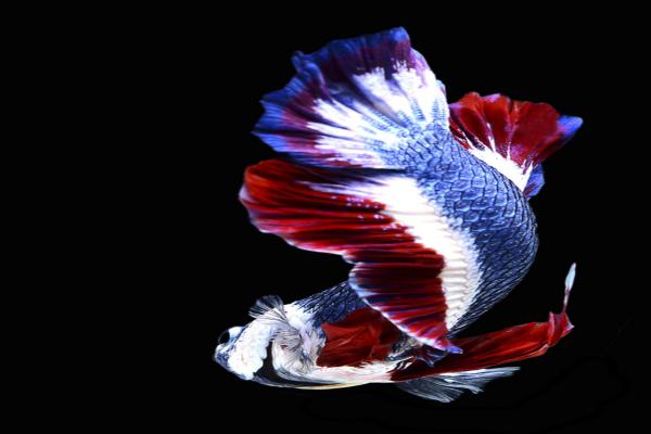 इस अनोखी मछली ने मालिक को बना दिया मालामाल(Pics)