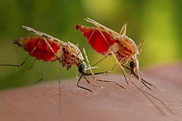 मलेरिया से 81 प्रतिशत मौतों वाले चार देशों में भारत शामिल