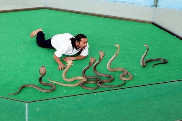 того, из-за ферма змей в паттайе термобелья