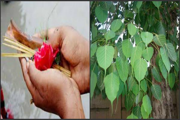 आज के दिन श्राद्ध के साथ करें ये सरल उपाय होगी  शुभ फलों की प्राप्ति