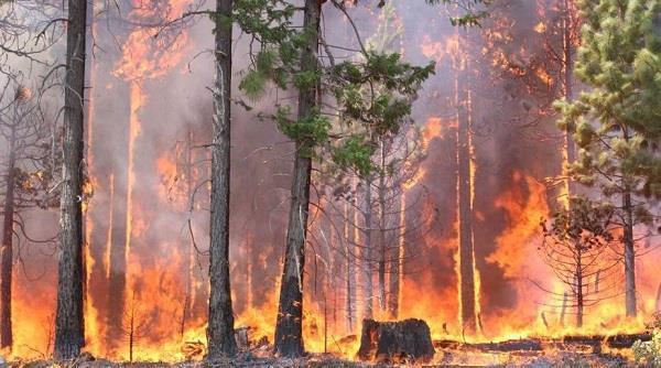 भीषण आग की चपेट में कैलिफ़ोर्निया; 21 की मौत, 1500 इमारतें नष्ट