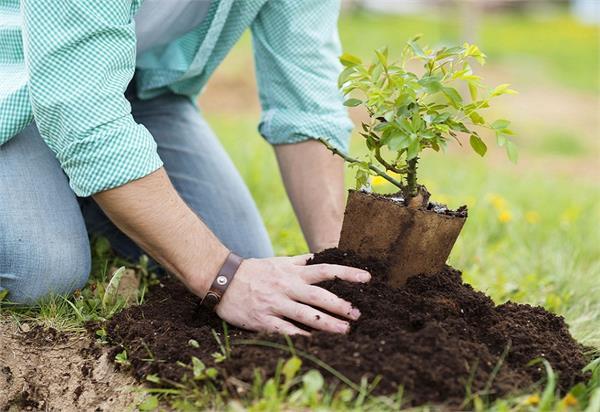 Festival Seasons: इन पौधों को लगाकर पाएं कई समस्याओं से छुटकारा