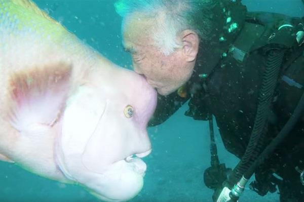इंसानों जैसे चेहरे वाली मछली 30 साल से यूं निभा रही दोस्ती