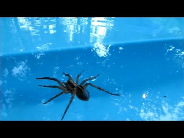 आसानी से समुद्री यात्रा कर सकती हैं मकड़ियां