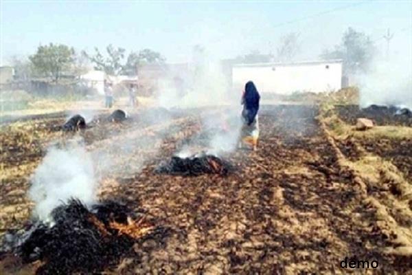 विधायक के सामने किसानों ने जलाई फसल की होली