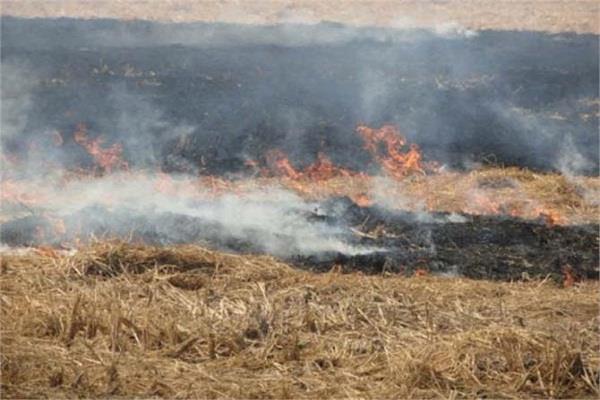 NGT ने पंजाब से कहा, ऐसे 21 किसान पेश करें जिन्हें पराली जलाने से रोका