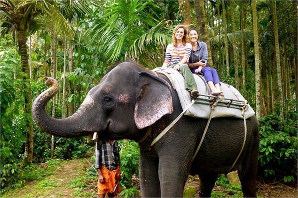 भारत के इन जंगलों में Elephant Safaris का लें मजा