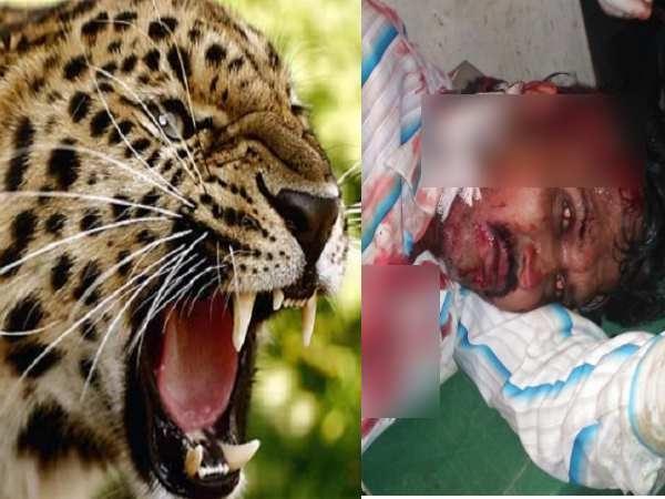 प्रतापगढ़ में तेंदुए का खूनी खेलः 3 लोगों को नोचा, दहशत में गांव