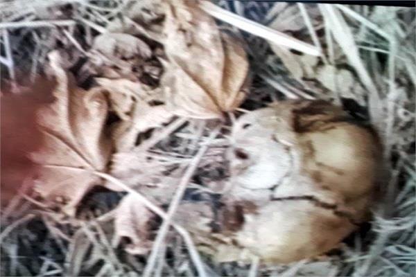 पिता से बदला लेने के लिए दरिंदे ने बच्ची को मार कर सुनसान जगह पर फेंका, कुत्तों ने नोच खाई लाश