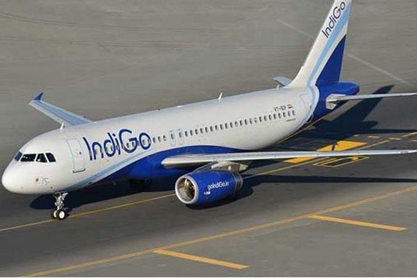 जंगली सुअर ने रोकी इंडिगो विमान की उड़ान