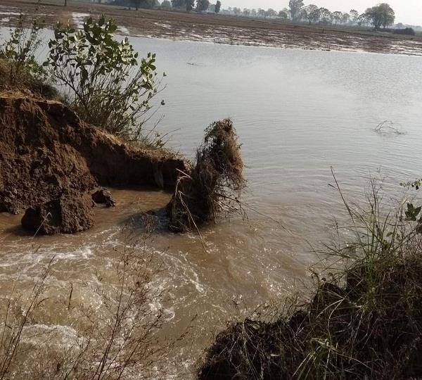 रजबाहे में दरार पडऩे से 60 एकड़ गेहूं के खेतों में भरा पानी