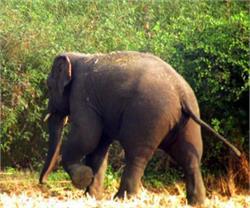सोनभद्र में जंगली हाथी ने जमकर मचाया उत्पात, महिला समेत 3 घायल
