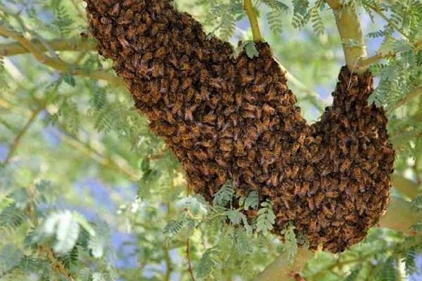 आदर्श स्कूल के छात्रों पर मधु मक्खियों ने किया हमला