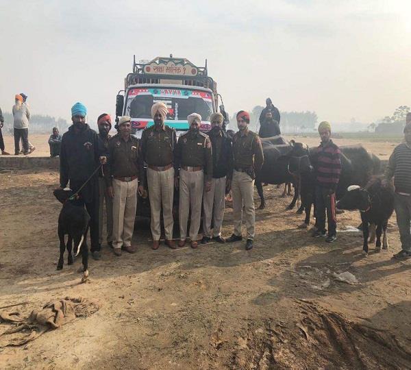 पुलिस नाका देख टाटा 407 में मवेशी छोड़ भागे चोर