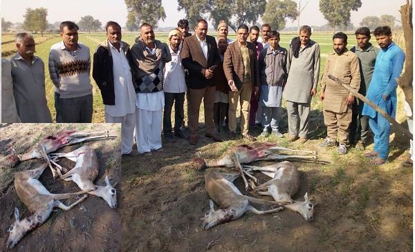 आवारा कुत्तों के झुंड ने 3 हिरणों को मार गिराया, 2 नील गाएं घायल