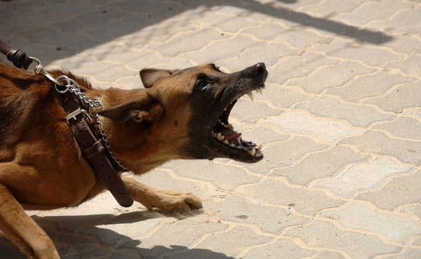कुत्ते ने की गलती, मालकिन को मिली 4 साल की जेल